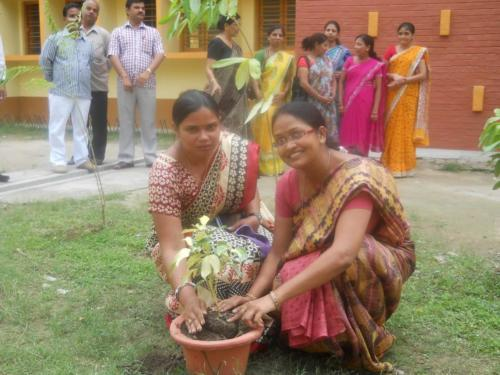 Plantation by OSHA in School on 05-09-2014